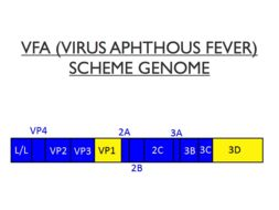 Image of Aphthovirus