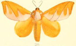 Image of <i>Mahanta quadrilinea</i> Moore 1879