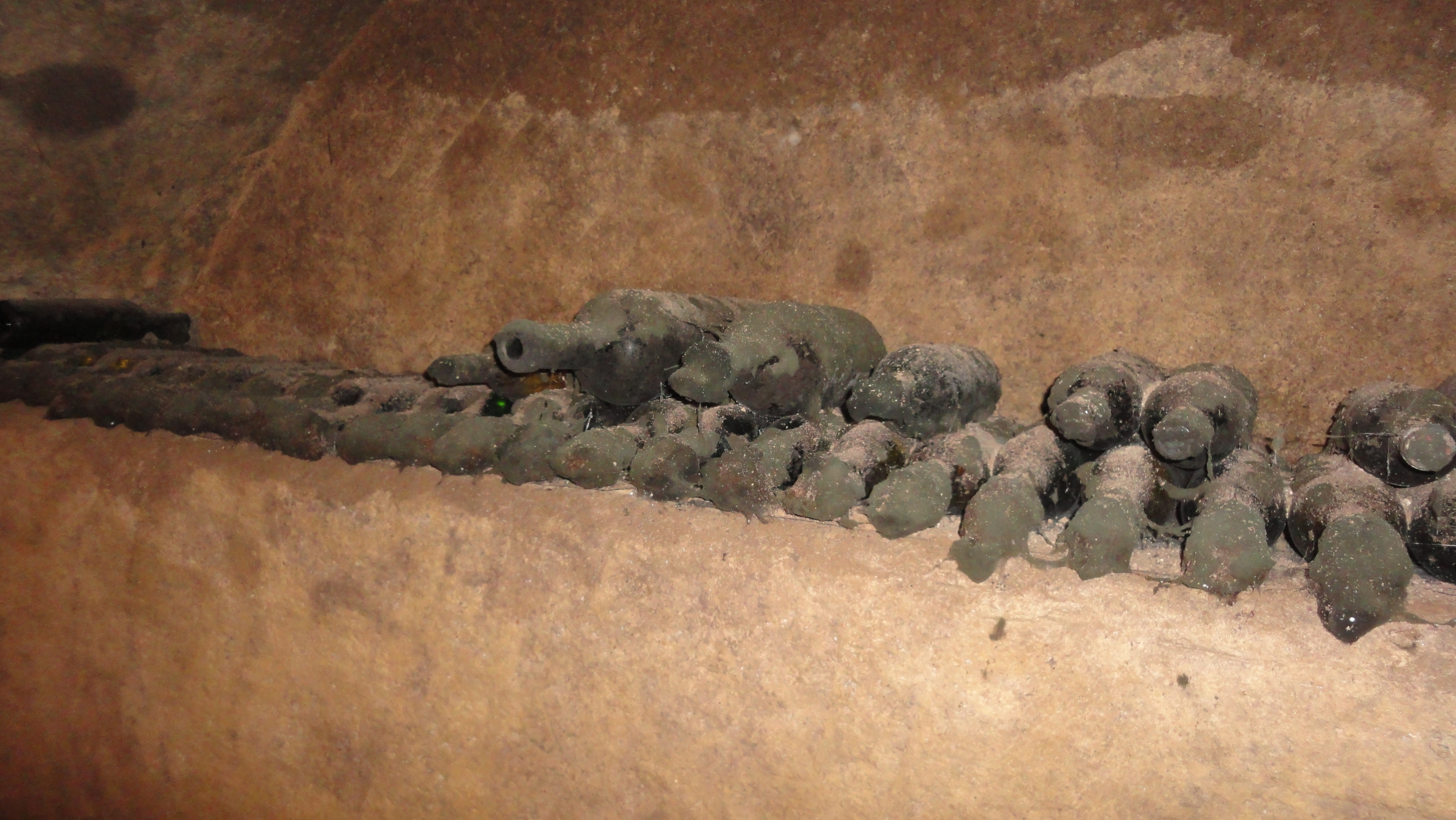 Image of Cladosporium