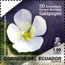 Image of Galapagos rock-purslane