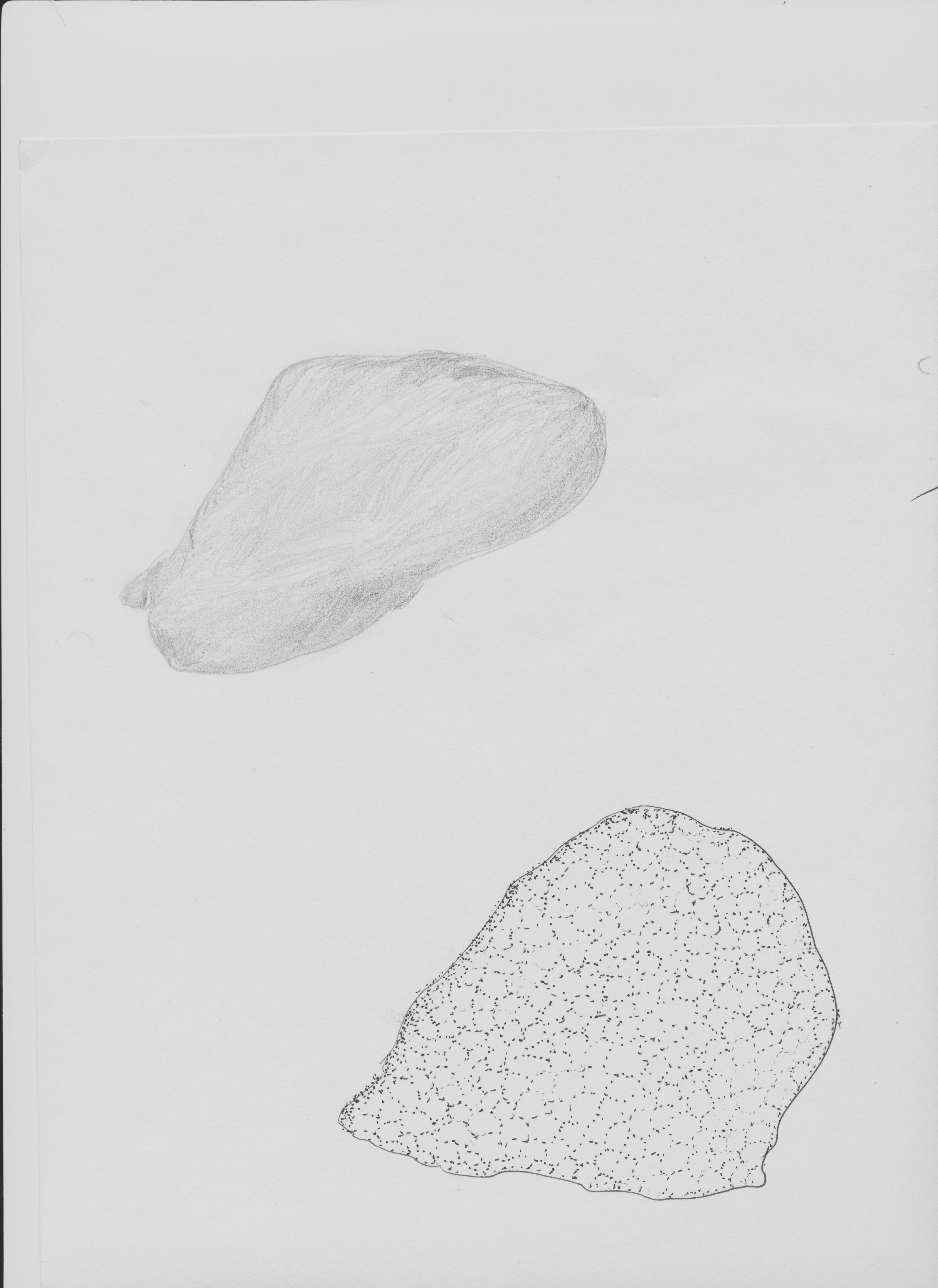 Image of placozoans