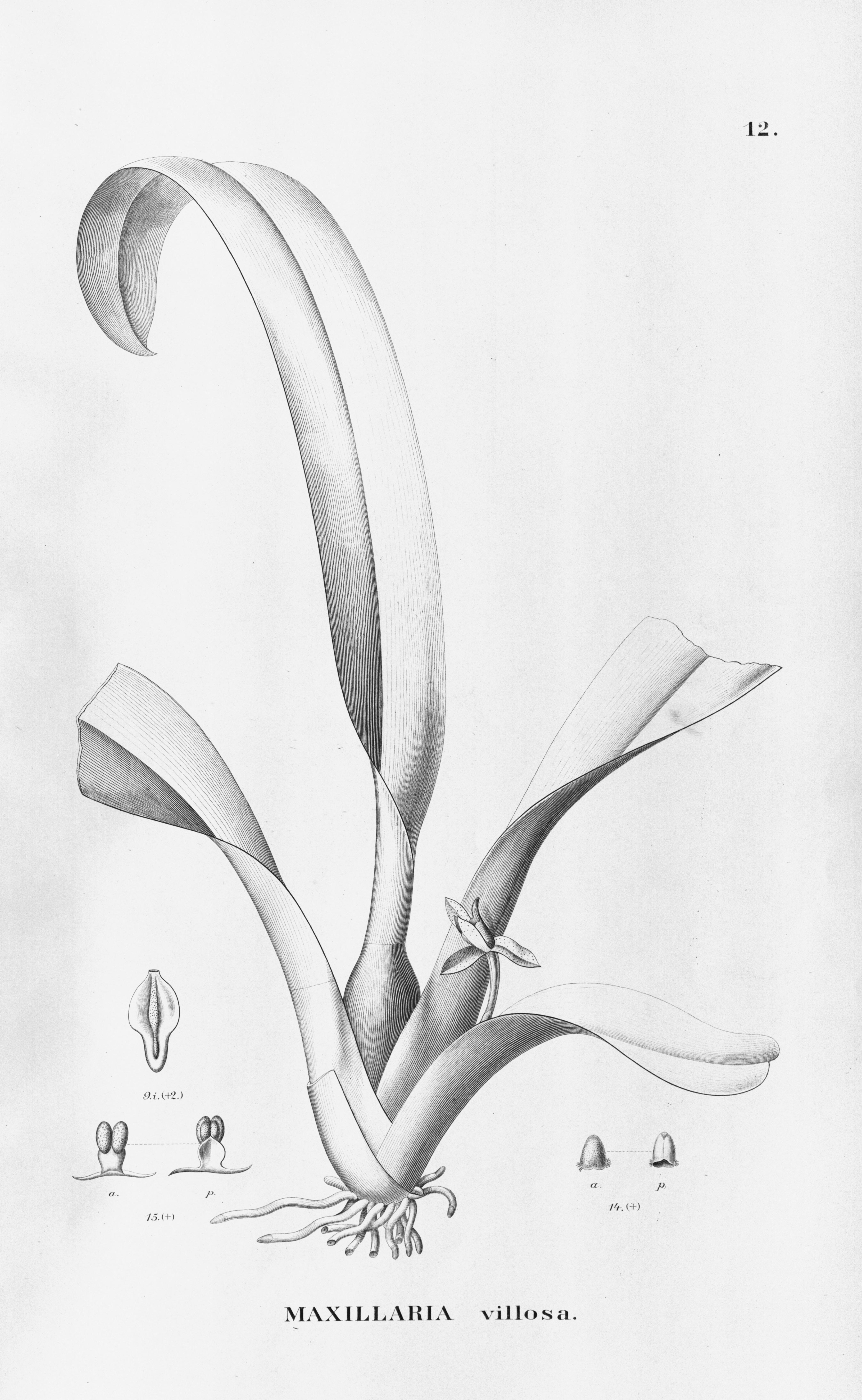 Image of Heterotaxis