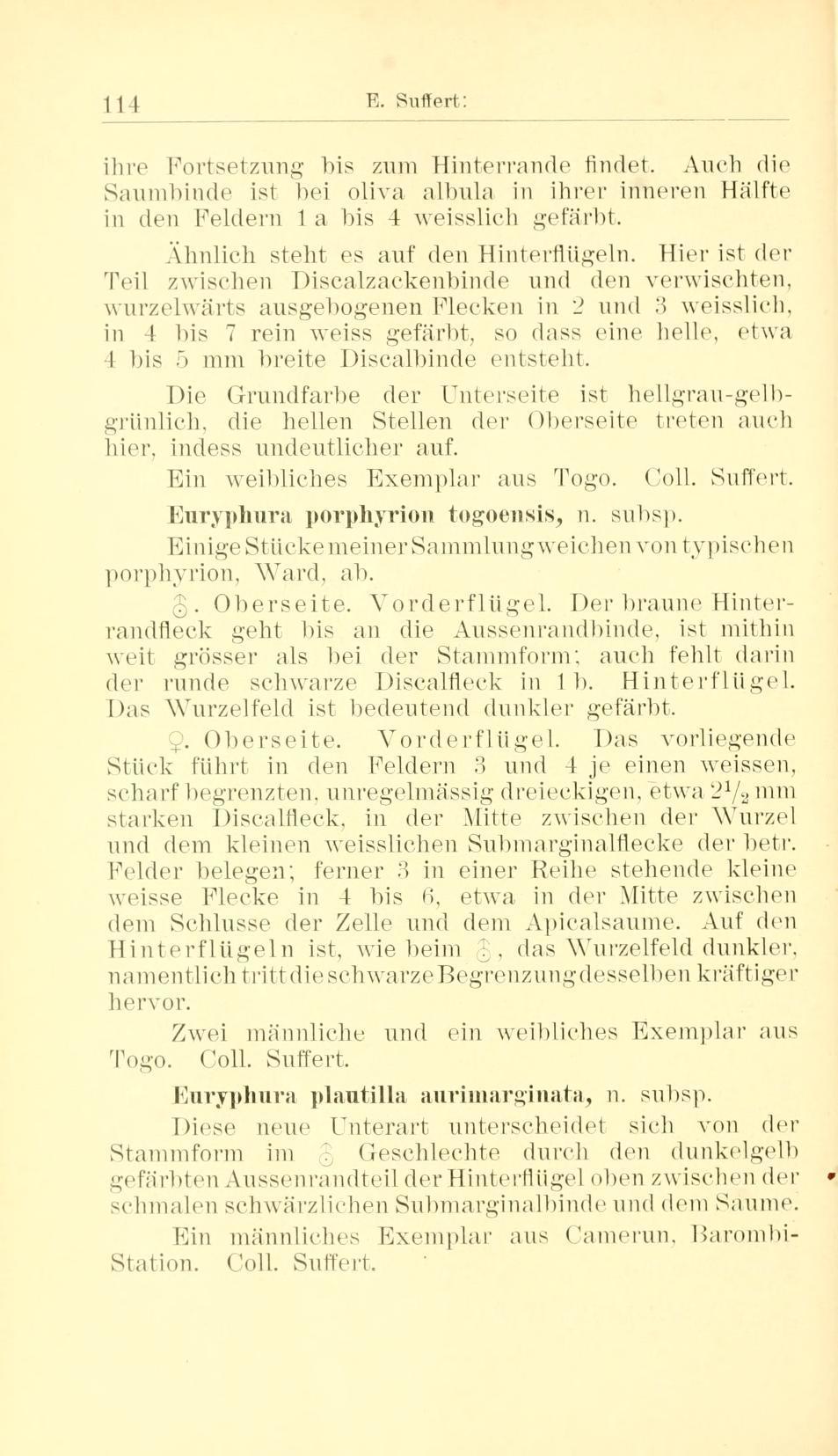 Image of <i>Euryphura togoensis</i> Suffert 1904