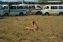 Image of Tanzanian cheetah