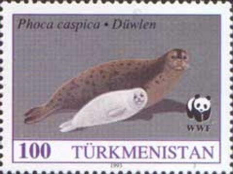 Image of <i>Pusa caspica</i> (Gmelin 1788)