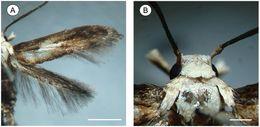 Image of <i>Palaeomystella fernandesi</i>