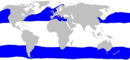 "<span class=""translation_missing"" title=""translation missing: en.medium.untitled.map_image_of, page_name: basking sharks"">Map Image Of</span>"
