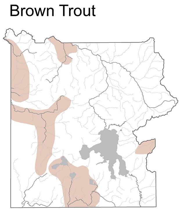 Map of <i>Salmo trutta fario</i>
