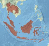 """<span class=""""translation_missing"""" title=""""translation missing: en.medium.untitled.map_image_of, page_name: &lt;i&gt;Clea helena&lt;/i&gt; (von dem Busch 1847)"""">Map Image Of</span>"""