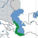 Image of Eastern tubenose goby