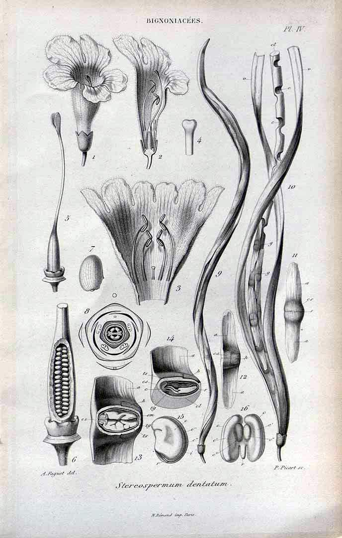 Image of Nhacavunguti