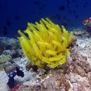 Image of feather stars