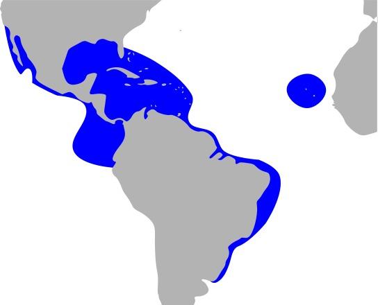 "<span class=""translation_missing"" title=""translation missing: en.medium.untitled.map_image_of, page_name: Fregata Lacépède 1799"">Map Image Of</span>"