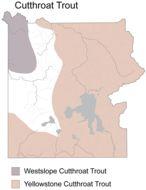 Map of <i>Oncorhynchus <i>clarkii</i></i> clarkii