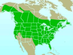 Map of Downy Woodpecker