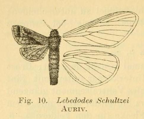 Image of <i>Paralebedella schultzei</i> Aurivillius 1905
