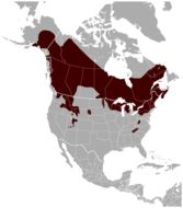 Map of American Flying Squirrels
