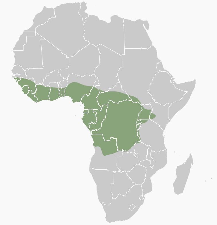 "<span class=""translation_missing"" title=""translation missing: en.medium.untitled.map_image_of, page_name: Tree Pangolin"">Map Image Of</span>"