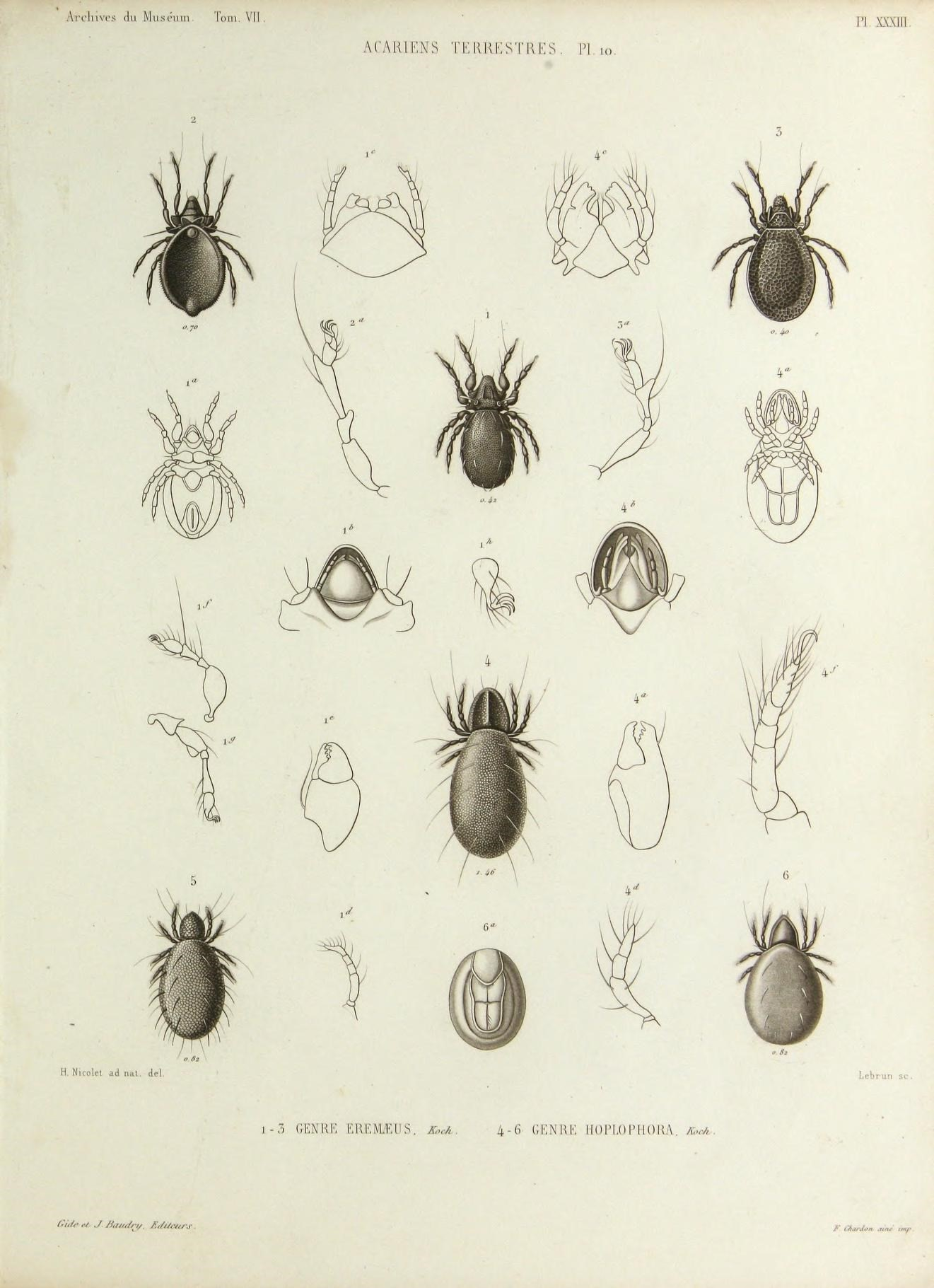 Image of stored product mites