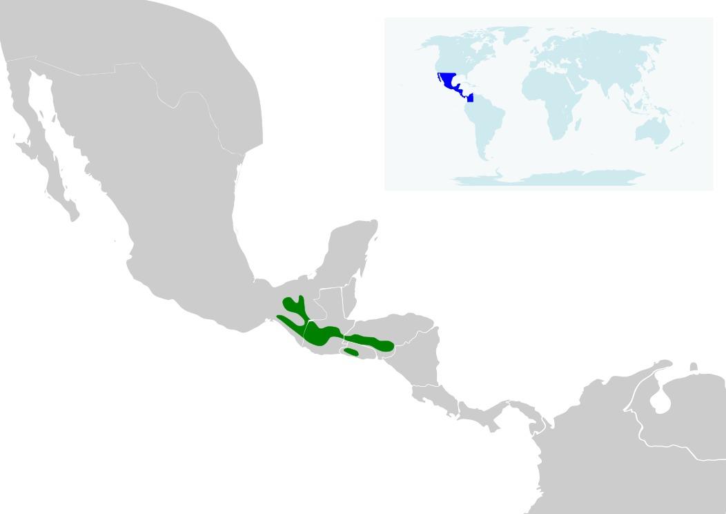 Map of Rufous-collared Robin