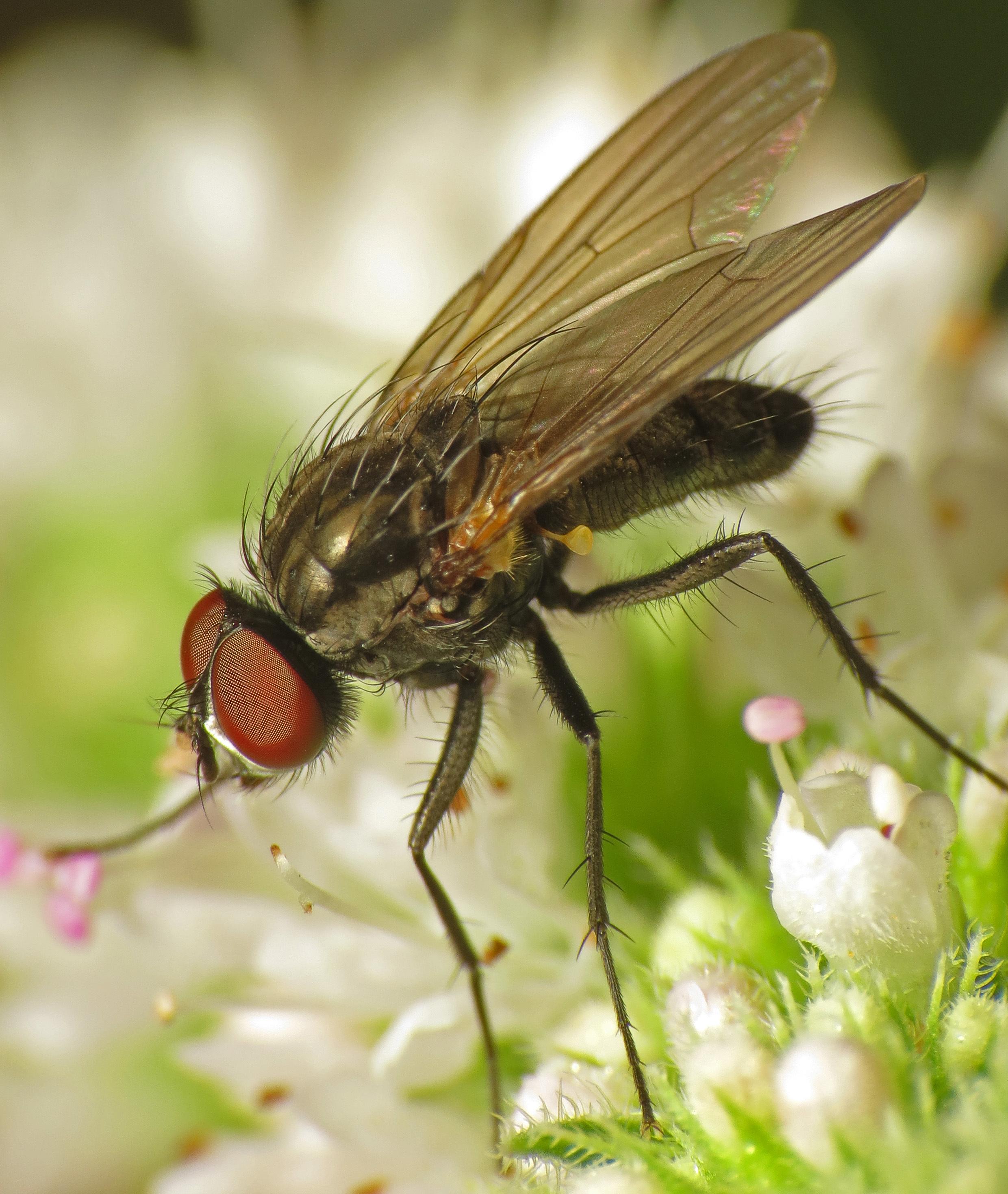 Image of Botanophila