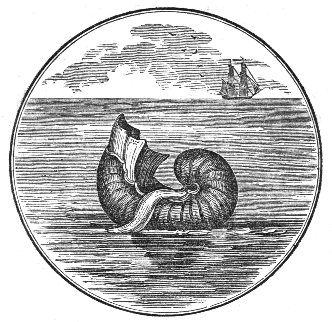 Image of Argonaut