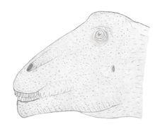 Image of Titanosauria