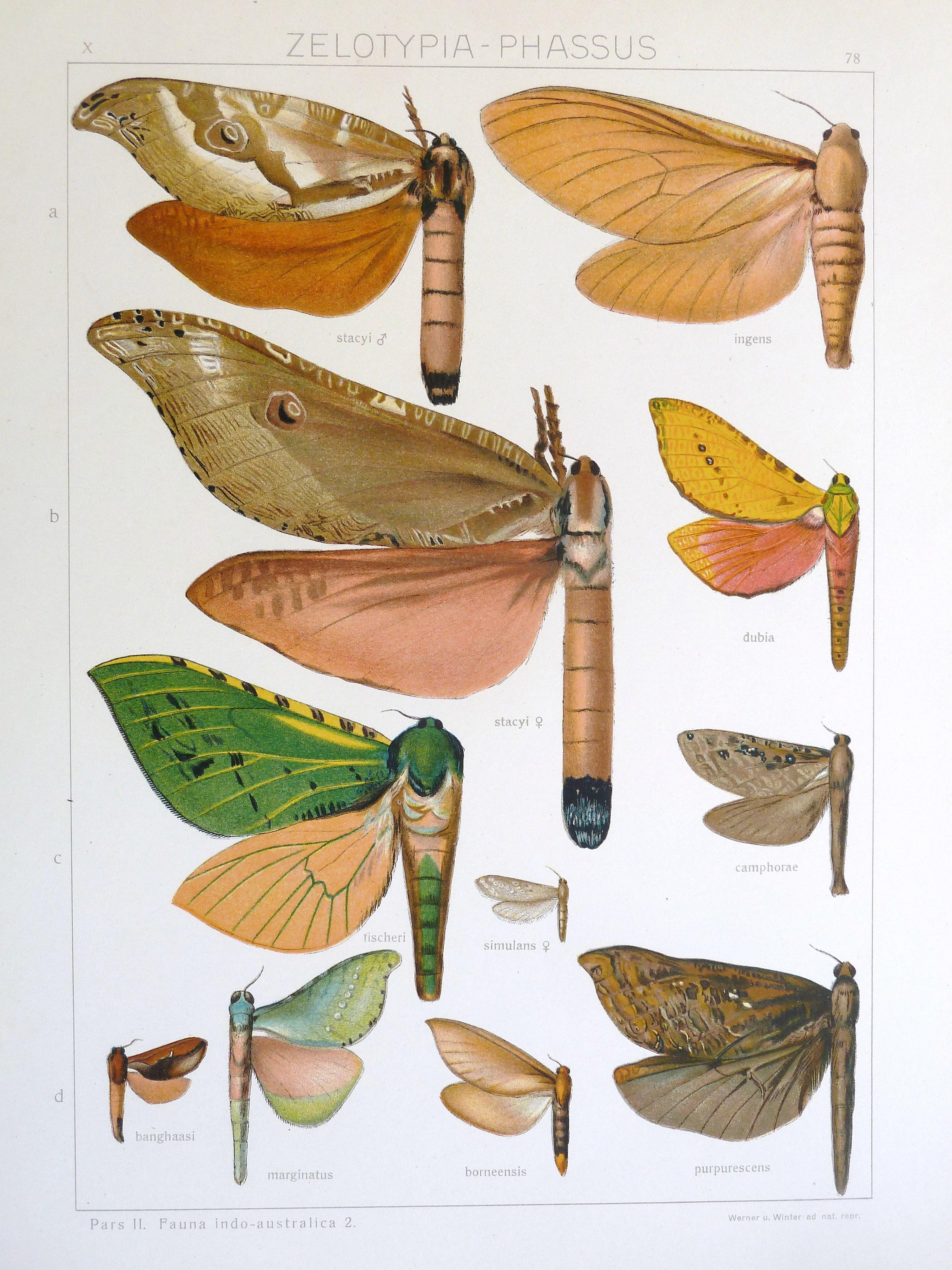 Image of Zelotypia