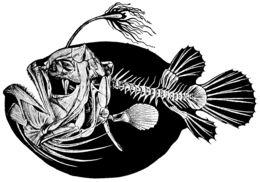 Image of Atlantic Football-Fish