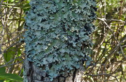 Image of Black stone flower