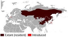 Map of Siberian Chipmunk