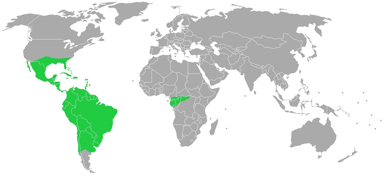 "<span class=""translation_missing"" title=""translation missing: en.medium.untitled.map_image_of, page_name: bromeliads"">Map Image Of</span>"