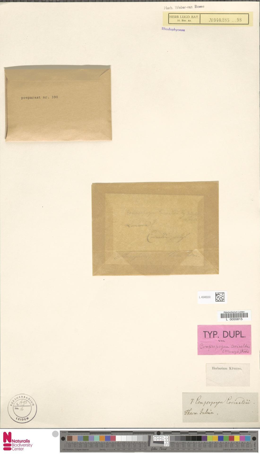 Image of Compsopogon