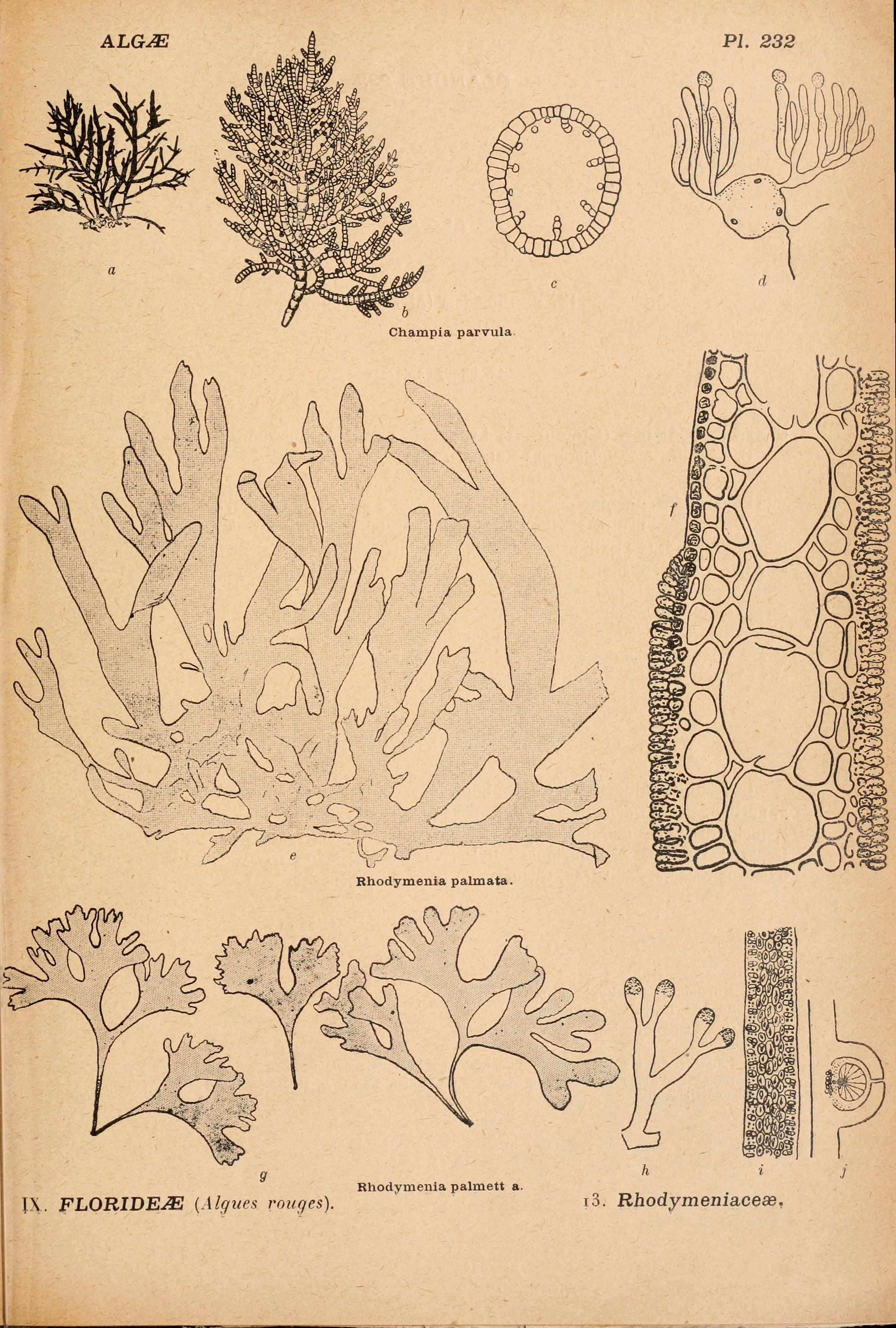 Image of Creathnach