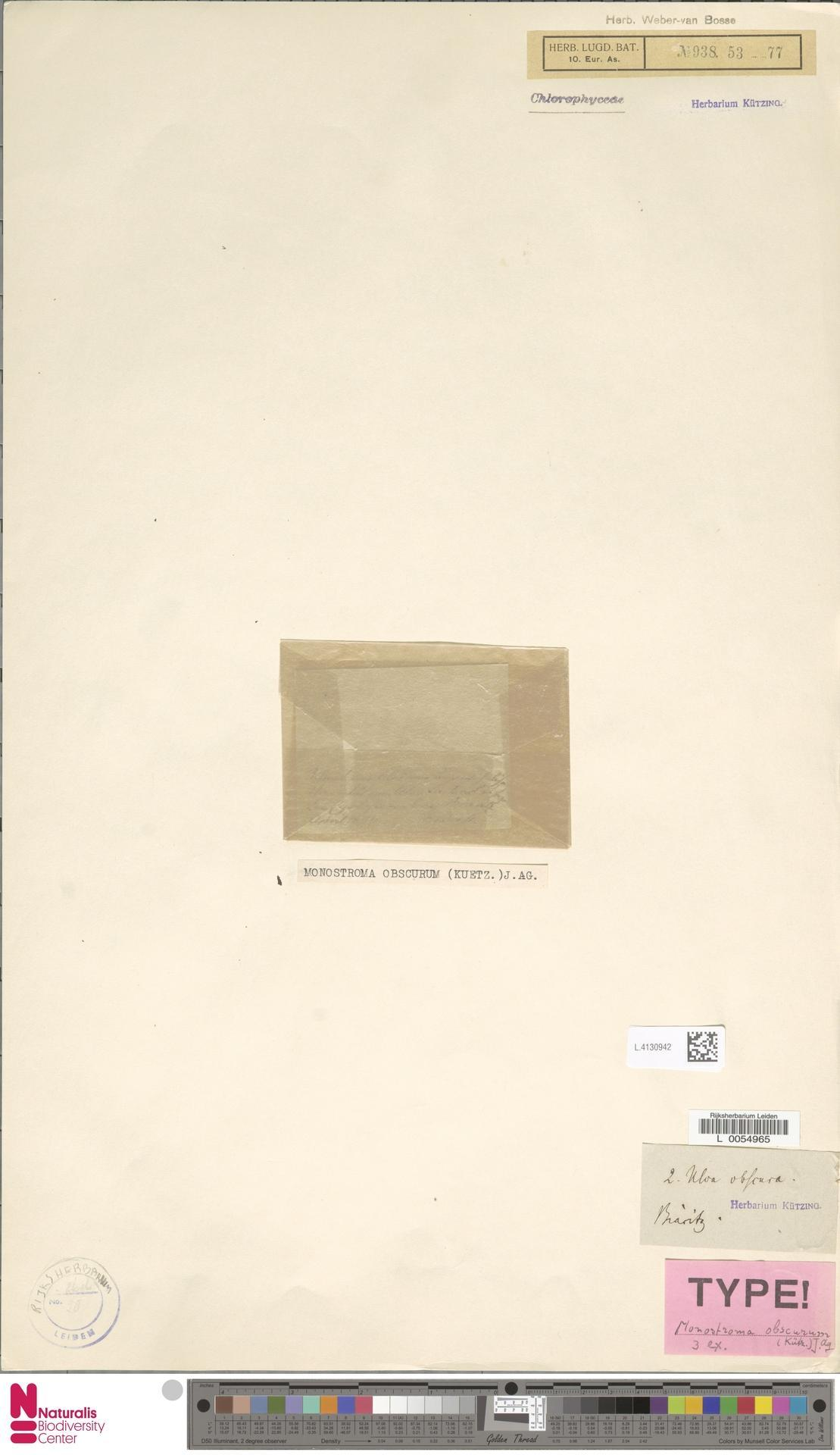 Image of Monostroma