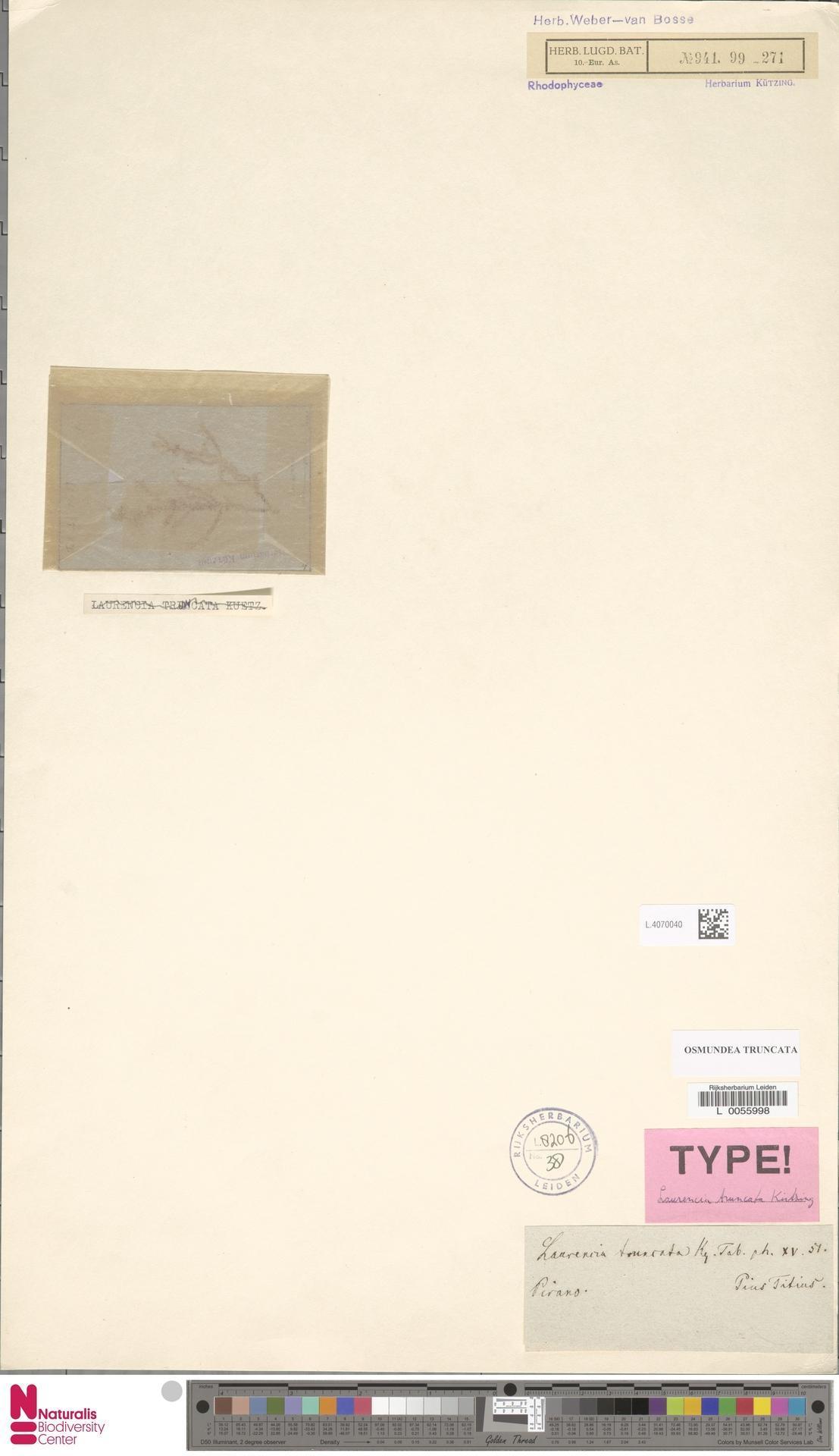 Image of Osmundea