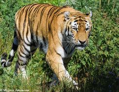 Image of Big cats