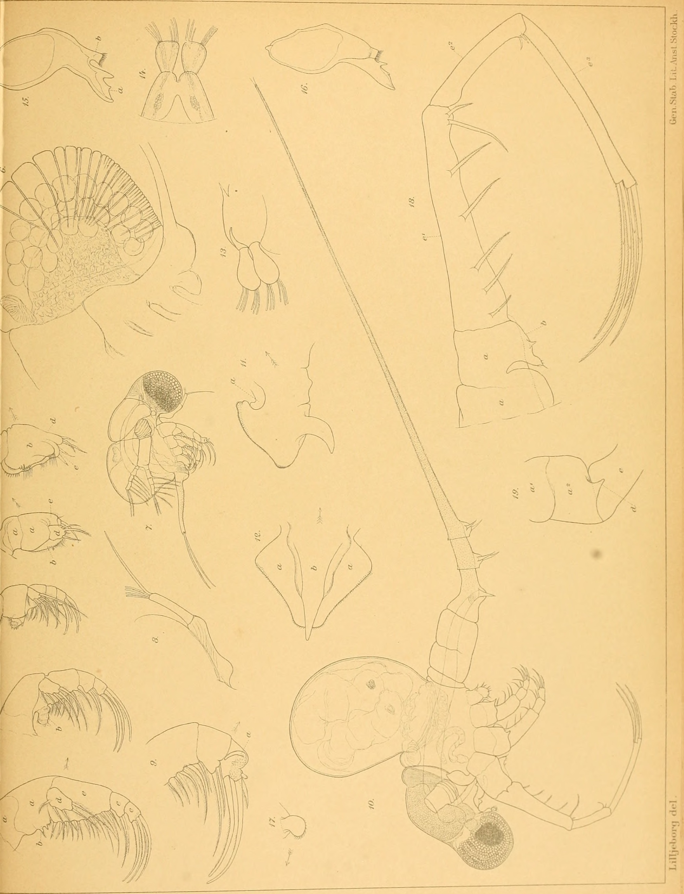 Image of cladocerans