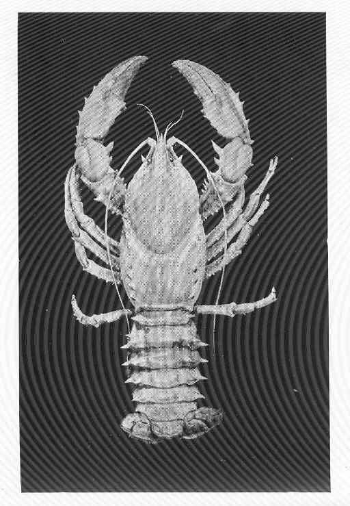 Image of clawed lobster