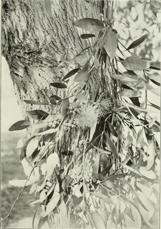 Image of yate