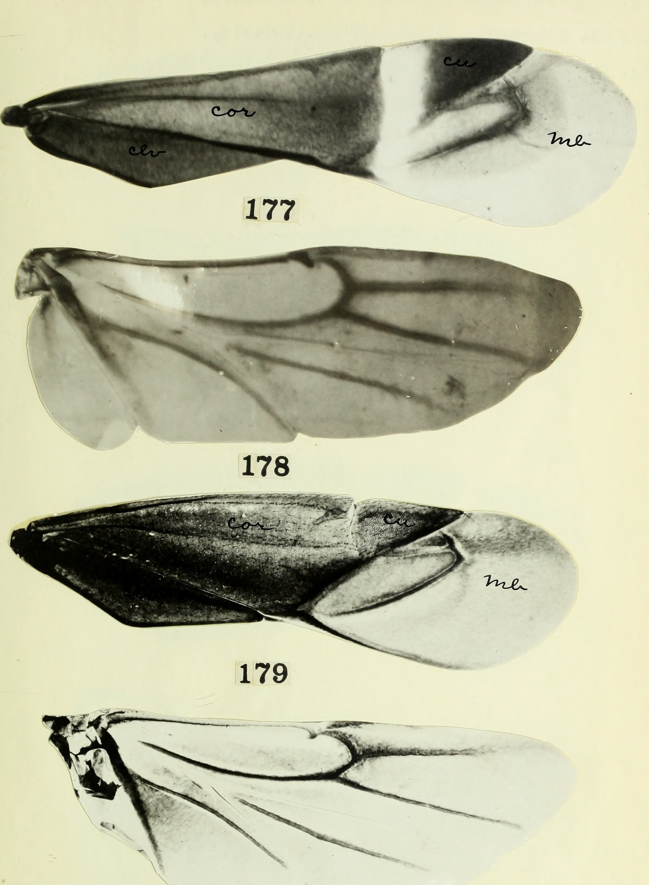 Image of jumping tree bugs
