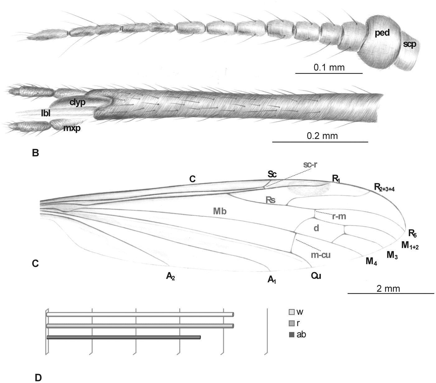 Image of <i>Elephantomyia baltica</i>