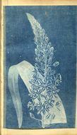 Image of <i>Albuca bracteata</i> (Thunb.) J. C. Manning & Goldblatt