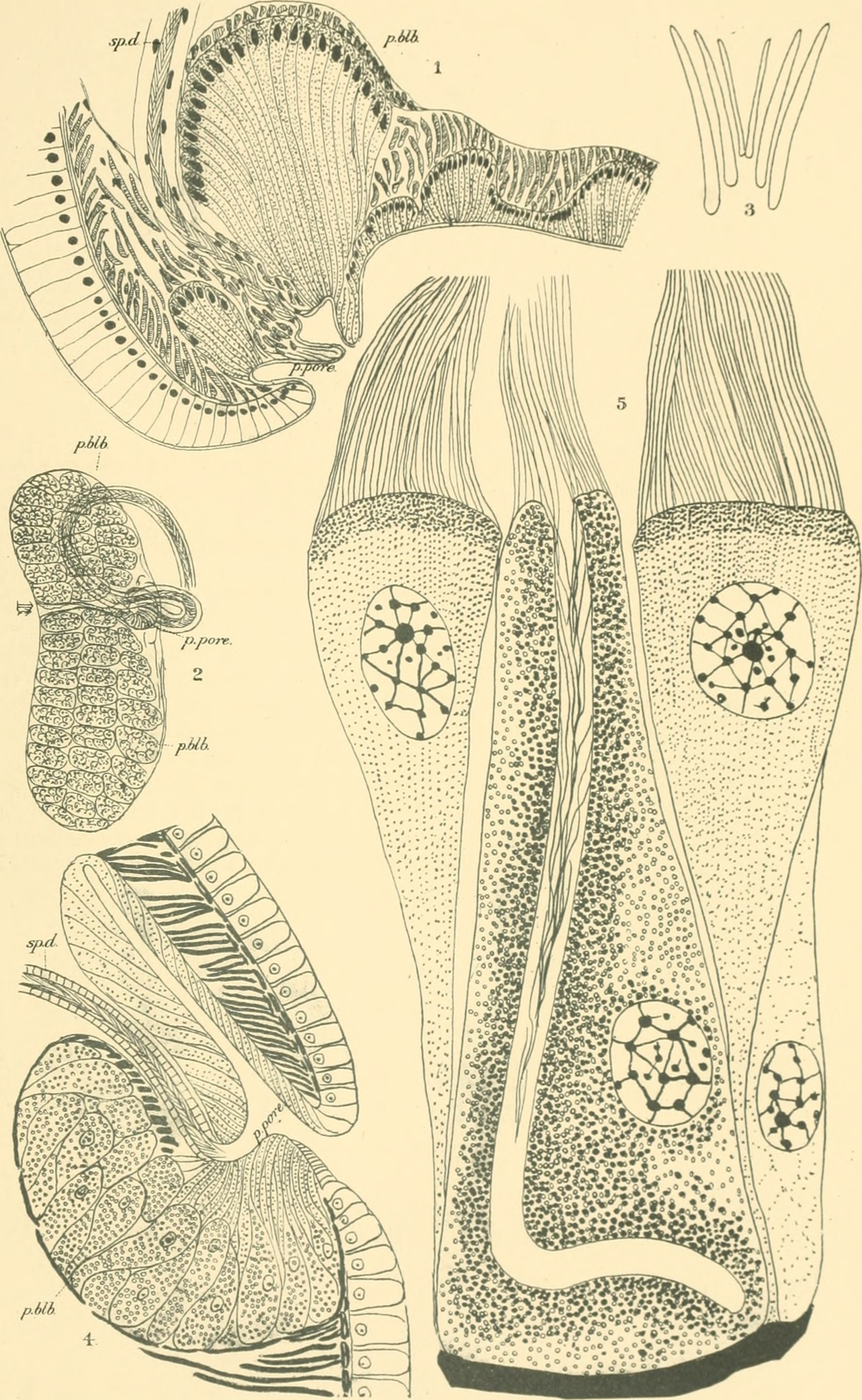 Image of pot-worms