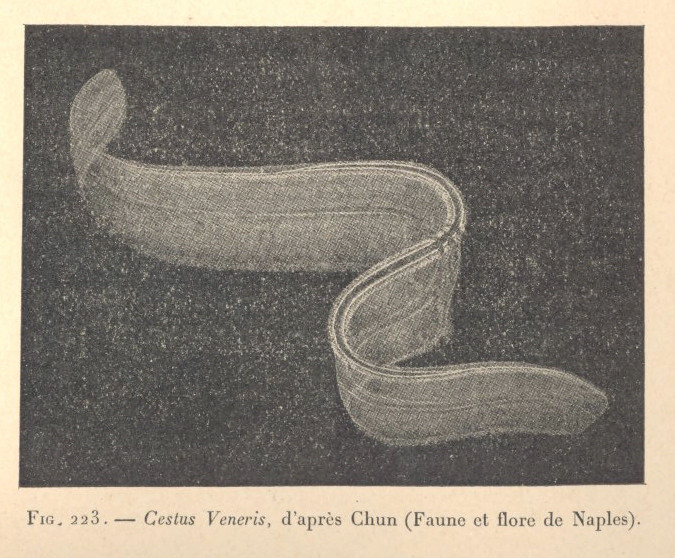 Image of Venus girdle
