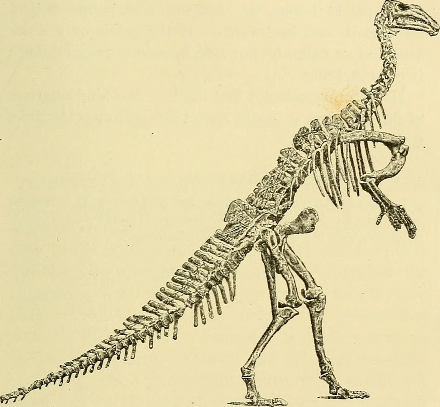 Image of Dollodon