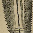 Image of tongueworm