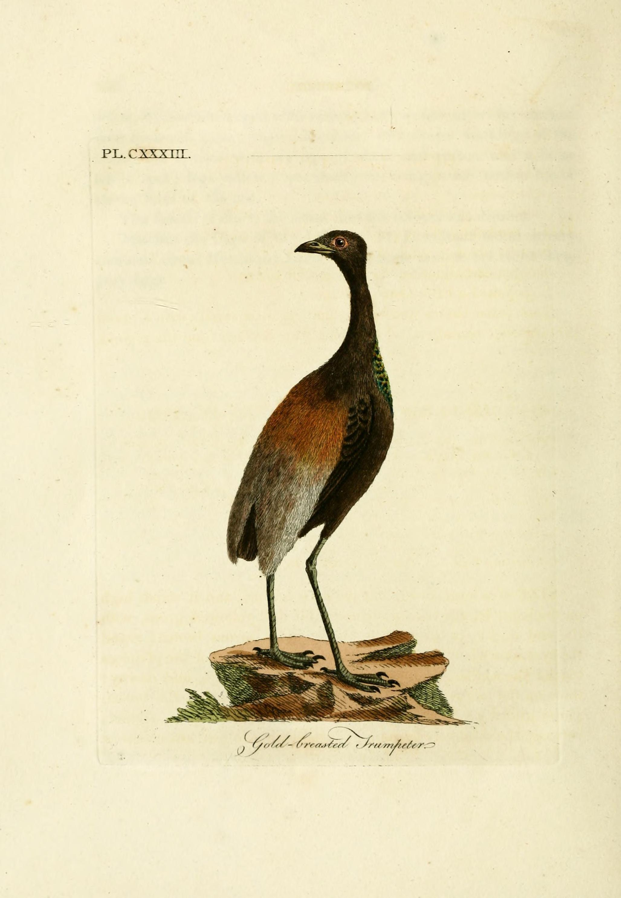 Image of trumpeters