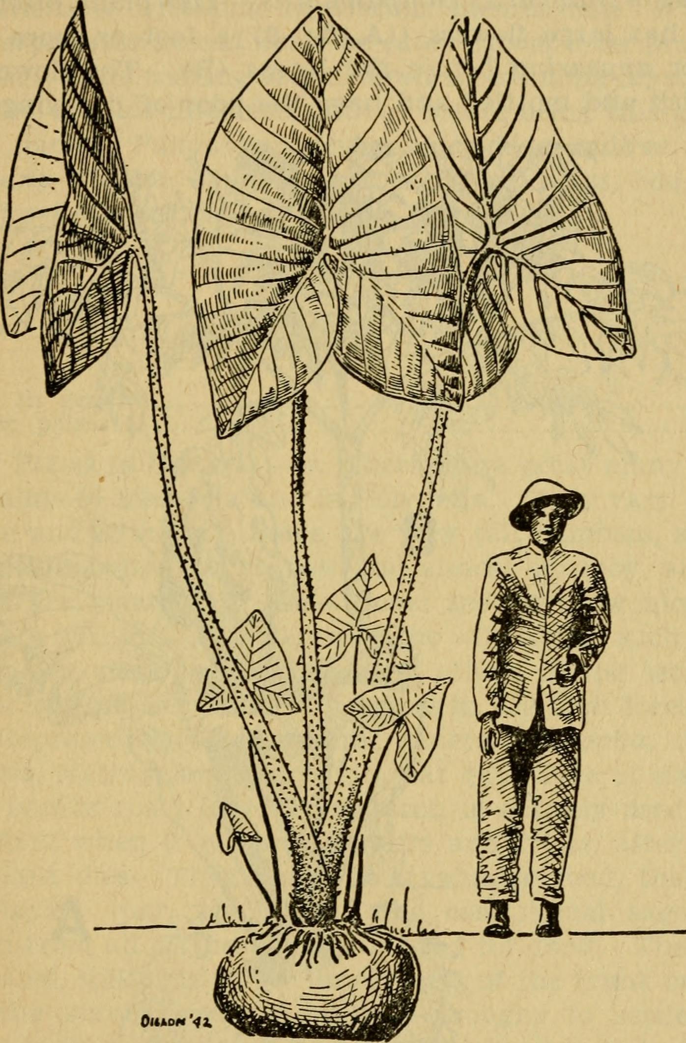 Image of gallan