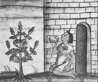 Image of Spanish sage